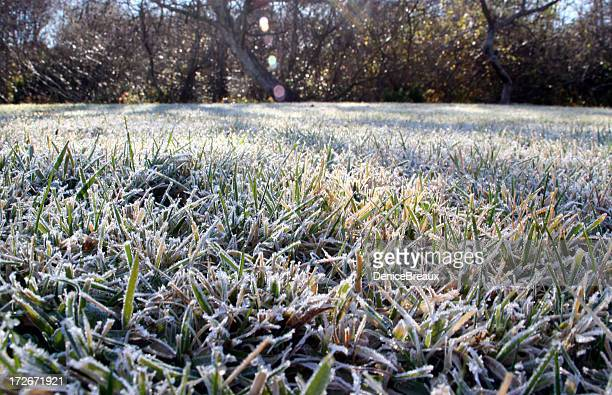 frosty lawn - frost stock pictures, royalty-free photos & images