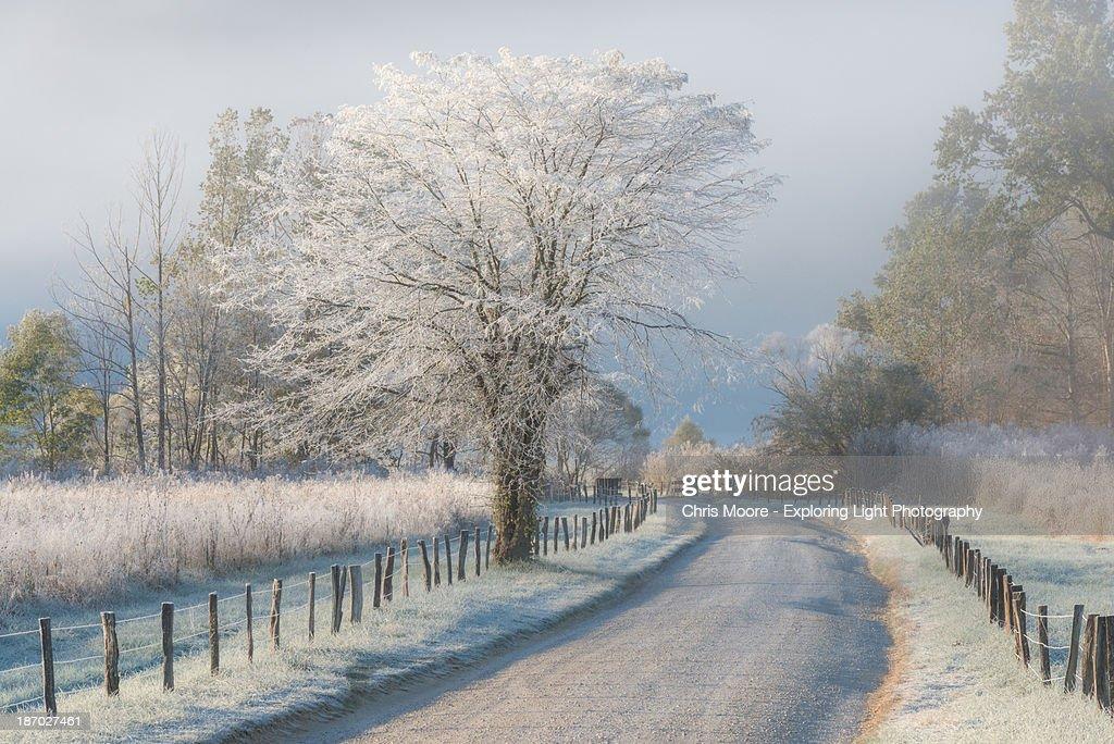 Frosty morning : Stock Photo