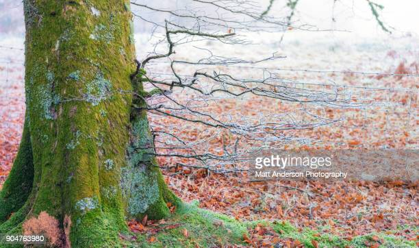 Frosty Mossy Colorful Tree Trunk