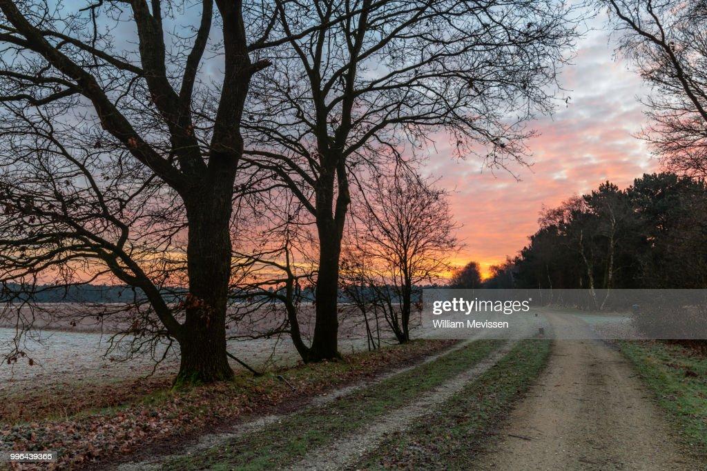 Frosty Path : Stockfoto