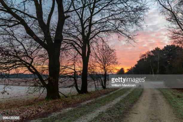 frosty path - william mevissen fotografías e imágenes de stock