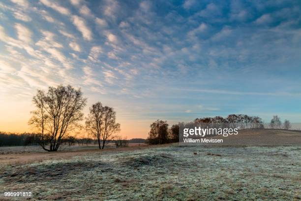 frosty sunrise - william mevissen stock pictures, royalty-free photos & images