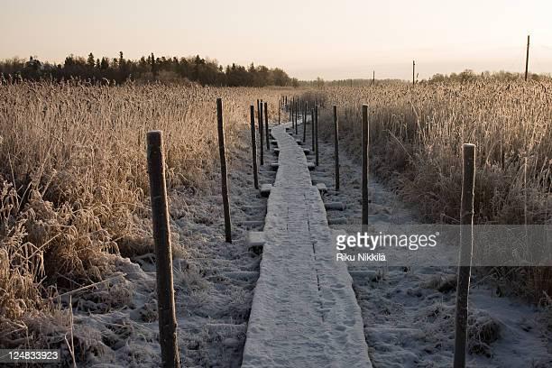 Frosty trail in winter