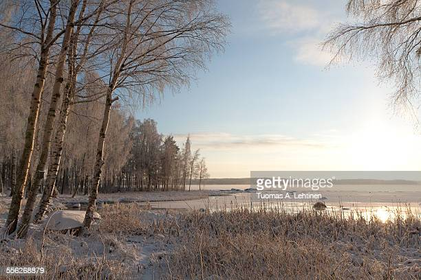 Frosty trees and frozen lake in Finland