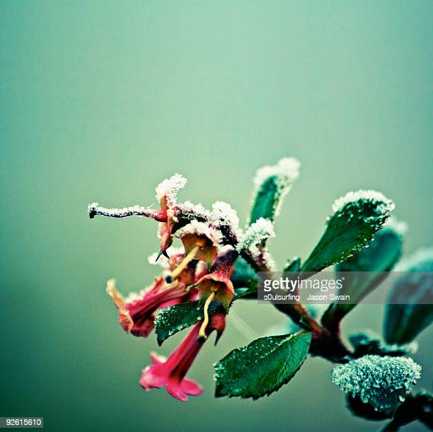 frosty urban acid trumpet bokeh - s0ulsurfing stock pictures, royalty-free photos & images