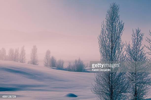 Frosty winter landscape, Colorado