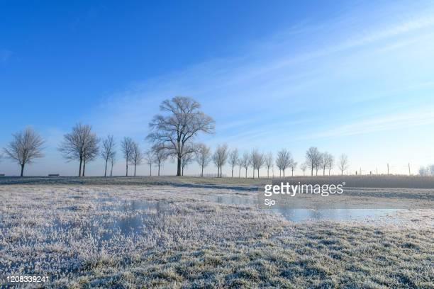 """ijzig winterlandschap tijdens een vroege zonnige ochtend - """"sjoerd van der wal"""" or """"sjo"""" stockfoto's en -beelden"""
