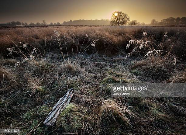 a frosty winter landscape. - alex saberi stock pictures, royalty-free photos & images