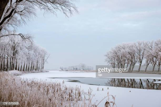 """frosty winter landscape with frozen trees during a beautiful day - """"sjoerd van der wal"""" or """"sjo"""" stock pictures, royalty-free photos & images"""