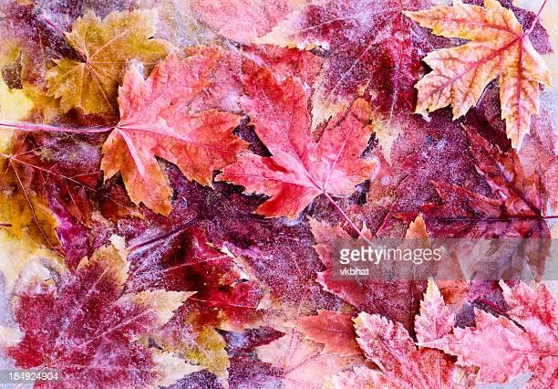 Frozen autumn leaves