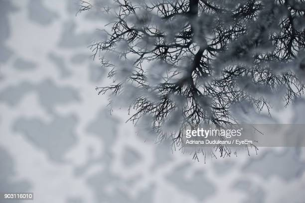 frozen bare tree during winter - adriana duduleanu stock photos and pictures