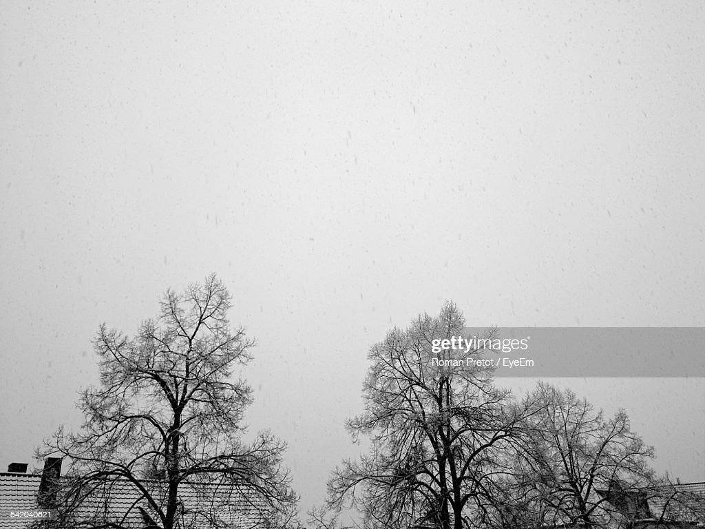 Frozen Bare Trees Against Clear Sky : Stock-Foto