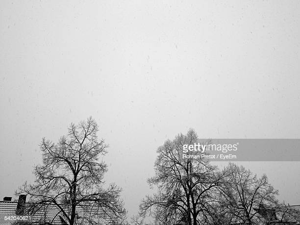 frozen bare trees against clear sky - roman pretot stock-fotos und bilder
