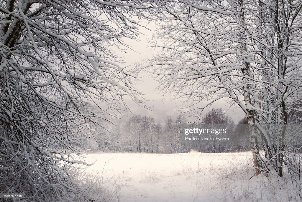 Frozen Bare Trees On Snowcapped Field During Winter : Stock Photo