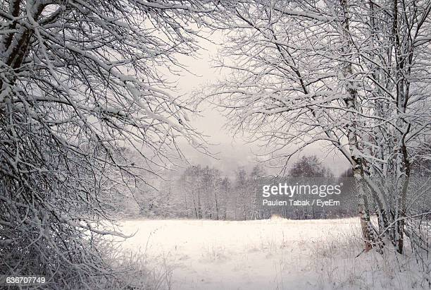 frozen bare trees on snowcapped field during winter - paulien tabak foto e immagini stock