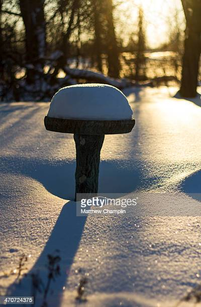 Birdbath Stock Photos And Pictures Getty Images