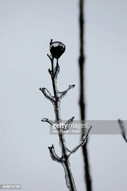 frozen branch - amy freeze stock pictures, royalty-free photos & images