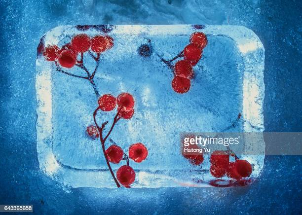 frozen cherry in ice bricks illuminated by candle light on the festival of snow illuminations in otaru, japan - snow festival stock pictures, royalty-free photos & images