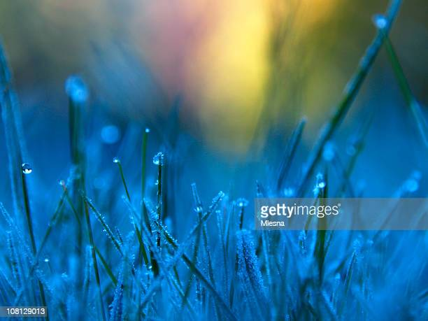 frozen dew 2 - frozen 2 stock pictures, royalty-free photos & images