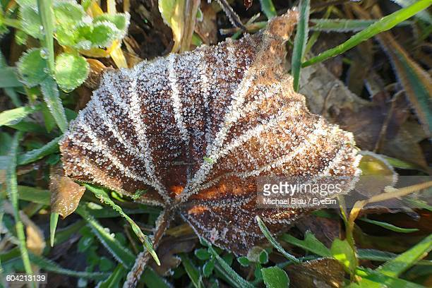 Frozen Dry Leaf On Field