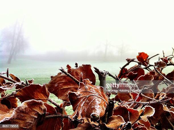Frozen Dry Leaves On Field During Foggy Weather