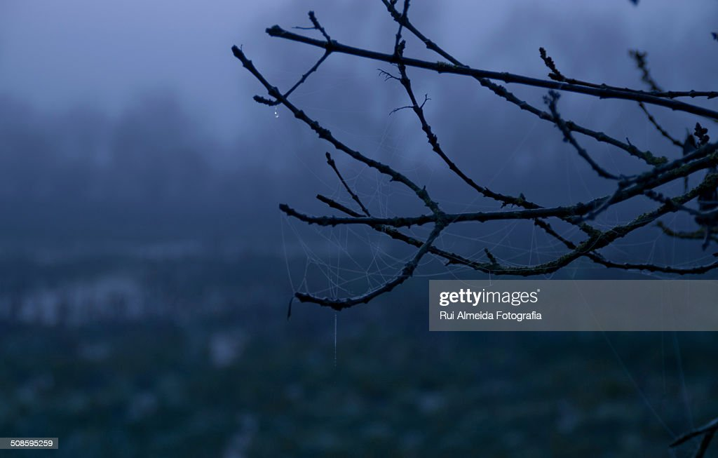 Frozen end of the day : Stock Photo