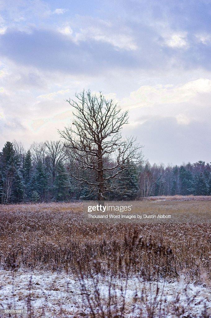 Frozen fields : Stock Photo