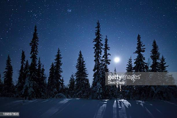 frozen forest in moonlight, kiruna, sweden - snow moon stock pictures, royalty-free photos & images