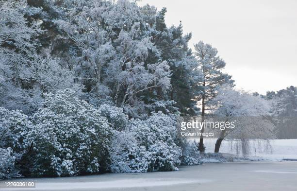 frozen forest in south england - surrey england stock pictures, royalty-free photos & images