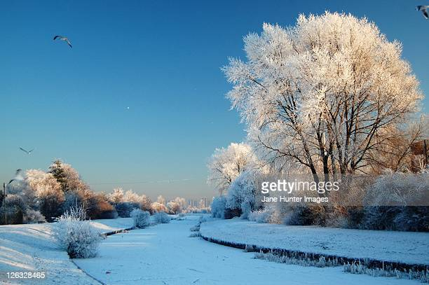 Frozen forth and clyde canal at clydebank