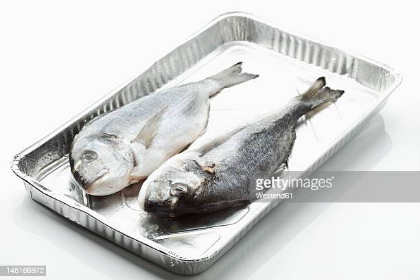 Frozen gilthead bream in tray, close up