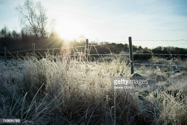Frozen grass by fence against sky on sunny day