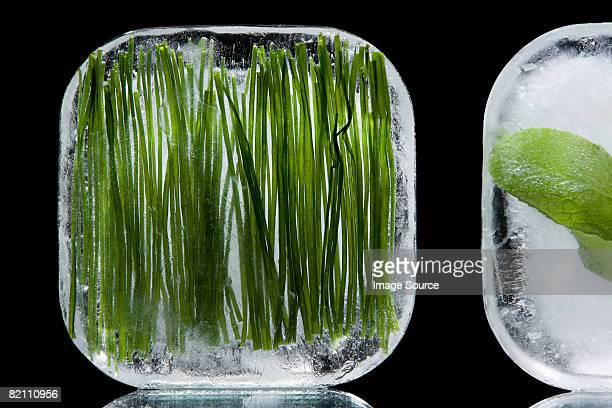 Frozen herbs