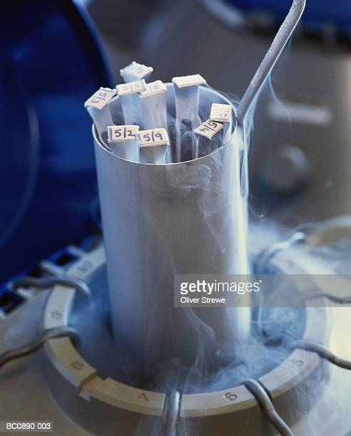 Frozen human embryos being removed from liquid nitrogen storage