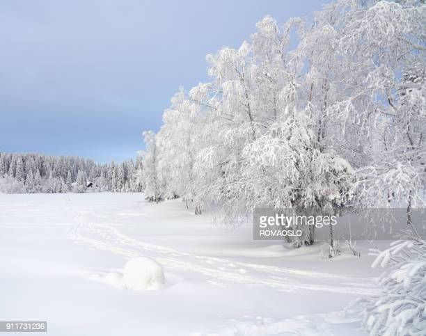 Frozen lake and snow covered forest, Nordmarka Oslo Norway