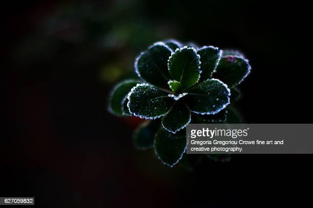 frozen leaves - gregoria gregoriou crowe fine art and creative photography. stock-fotos und bilder