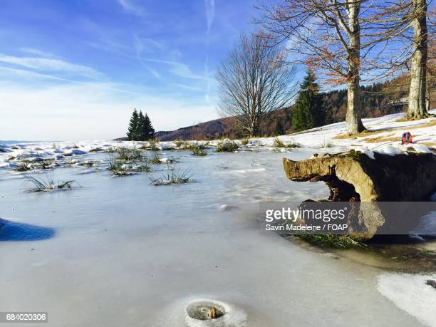 Frozen log in the lake