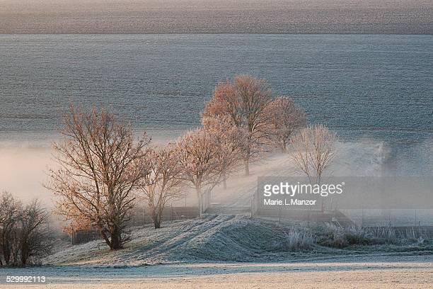 Frozen Meadows