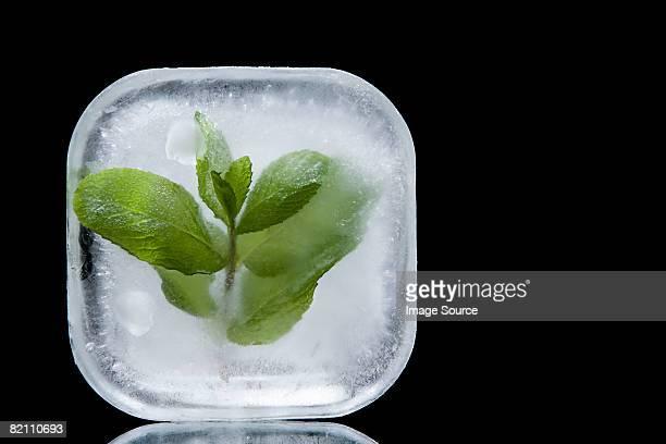 Frozen mint