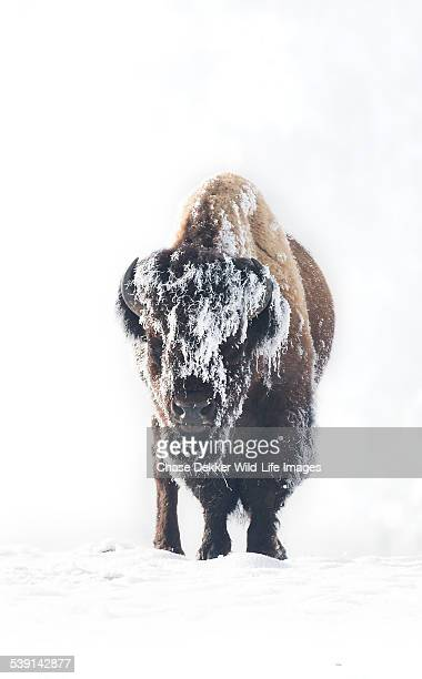 frozen - jackson hole stock pictures, royalty-free photos & images