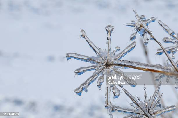 frozen - january stock pictures, royalty-free photos & images
