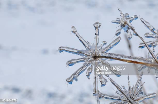 frozen - gennaio foto e immagini stock