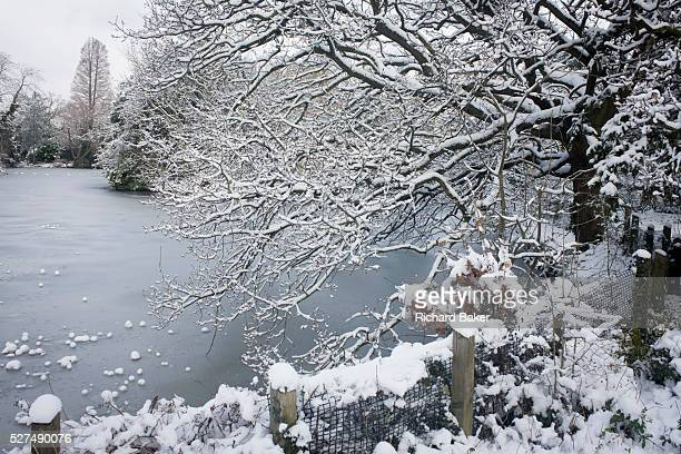 A frozen pond and tree landscape in Dulwich Park south London during midwinter snow During a prolonged cold spell of bad weather snow fell...