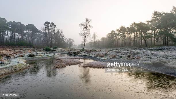 Frozen pond in the woods