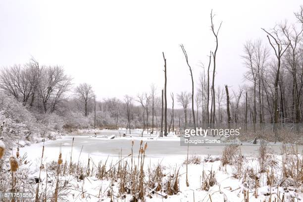 frozen pond - snow scene stock photos and pictures