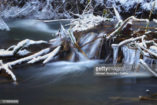 frozen river against trees during winter - michael hruschka stock pictures, royalty-free photos & images