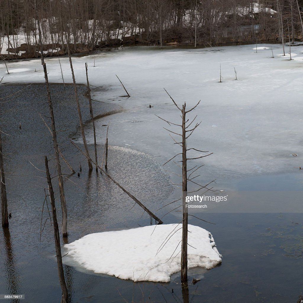 Frozen river in a forest : Stock Photo