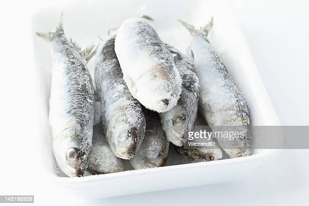 Frozen sardines in bowl on white background