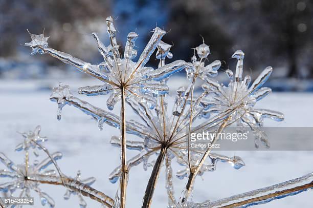 frozen stick