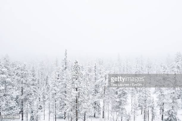 frozen trees in forest against sky during winter - winter weather stock photos and pictures